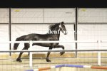 Bestelnummer 021215125 160 Popke fan it Hiem (Thorben x Beart).JPG