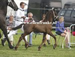 Bestelnummer 240813298 Pieter fan it Pompebled (Maurits x Feitse).JPG