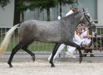 bestelnummer 240710113 nebills sir silverstone easter mountain didly do x burley phantom.jpg