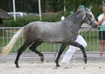 bestelnummer 240710114 nebills sir silverstone easter mountain didly do x burley phantom.jpg