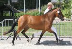 bestelnummer 240710127 princess of glory poppings marribo x peveril peter piper.jpg