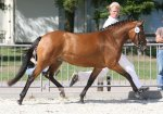 bestelnummer 240710128 princess of glory poppings marribo x peveril peter piper.jpg