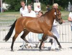 bestelnummer 240710129 princess of glory poppings marribo x peveril peter piper.jpg