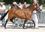 bestelnummer 240710130 princess of glory poppings marribo x peveril peter piper.jpg
