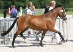 bestelnummer 240710131 princess of glory poppings marribo x peveril peter piper.jpg