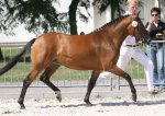 bestelnummer 240710132 princess of glory poppings marribo x peveril peter piper.jpg