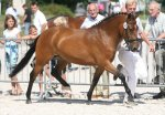 bestelnummer 240710133 princess of glory poppings marribo x peveril peter piper.jpg