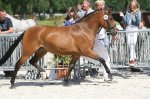 bestelnummer 240710134 princess of glory poppings marribo x peveril peter piper.jpg