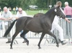 bestelnummer 240710218 wicked pitch black sulaatiks peter pan x marits mistique.jpg