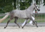 bestelnummer 240710223 willows lady do easter mountain didly do x hoppenhofs erwin.jpg