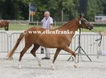 Bestelnummer 280712218 Ten Ankers Honeymau (Arenberg's Maurits x Brummerhoeve's Boss).JPG