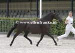 Bestelnummer 280712231 Wicked Pitch Black (Sulaatik's Peter Pan x Marits Mistique).JPG