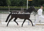 Bestelnummer 280712234 Wicked Pitch Black (Sulaatik's Peter Pan x Marits Mistique).JPG