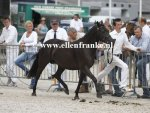 Bestelnummer 280712236 Wicked Pitch Black (Sulaatik's Peter Pan x Marits Mistique).JPG
