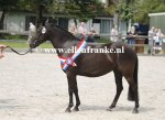 Bestelnummer 280712240 Wicked Pitch Black (Sulaatik's Peter Pan x Marits Mistique).JPG