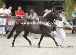 Bestelnummer 280712241 Wicked Pitch Black (Sulaatik's Peter Pan x Marits Mistique).JPG