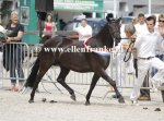 Bestelnummer 280712242 Wicked Pitch Black (Sulaatik's Peter Pan x Marits Mistique).JPG