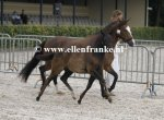 Bestelnummer 280712247 Wicked So and So (Haywards Guardsman x Marits Mistique).JPG