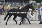 Bestelnummer 270713282 Wicked Pitch Black (Sulaatik's Peter Pan x Marits Mistique).JPG