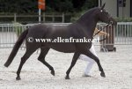 Bestelnummer 270713285 Wicked Pitch Black (Sulaatik's Peter Pan x Marits Mistique).JPG