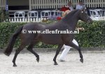 Bestelnummer 270713287 Wicked Pitch Black (Sulaatik's Peter Pan x Marits Mistique).JPG