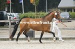 Bestelnummer 260814121 Altrido Olets Goldy (Esse Golden Bigwig x Priory Prickle)-002.JPG