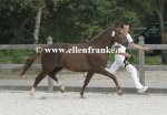 Bestelnummer 260814124 Altrido Toscas Gwendy (Bovenheigraafs Camillo x Arenbergs Maurits).JPG