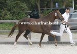 Bestelnummer 260814125 Altrido Toscas Gwendy (Bovenheigraafs Camillo x Arenbergs Maurits)-001.JPG