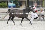 Bestelnummer 260814205 Comms Forest Gardenia (Haywards Guardsman x Arenbergs Maurits)-001.JPG