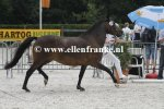 Bestelnummer 260814217 Eikenhorsts Astrid (Luckington Sportaide x Brummerhoeves Boss).JPG