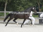Bestelnummer 260814245 Havehoeves Beauty (Reekamps Eclips x Aladin).JPG