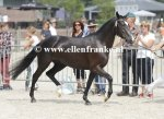 Bestelnummer 260814249 Havehoeves Beauty (Reekamps Eclips x Aladin)-004.JPG