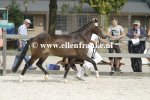 Bestelnummer 260814252 Hijker Forest Champagne TT (Kantjes Appart x Ashley Aristocrat)-001.JPG