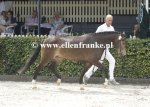 Bestelnummer 260814253 Hijker Forest Champagne TT (Kantjes Appart x Ashley Aristocrat)-002.JPG