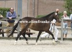 Bestelnummer 260814254 Hijker Forest Champagne TT (Kantjes Appart x Ashley Aristocrat)-003.JPG