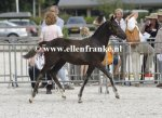 Bestelnummer 260814335 Poppings Clinton (Reekamps Eclips x Elshofs Otto).JPG