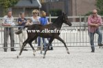 Bestelnummer 260814336 Poppings Clinton (Reekamps Eclips x Elshofs Otto)-001.JPG