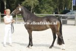 Bestelnummer 260814355 Ten Ankers Jomauley (Burley Phantom x Arenbergs Maurits).JPG