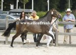 Bestelnummer 260814356 Ten Ankers Jomauley (Burley Phantom x Arenbergs Maurits)-001.JPG