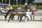 Bestelnummer 260814357 Ten Ankers Jomauley (Burley Phantom x Arenbergs Maurits)-002.JPG