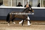 Bestelnummer 180212223 Paddington's O'Malley (Marits Mistique x The Rascals Farm Beau Geste).JPG