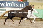 Bestelnummer 180212242 Stable-Line's Brave New World (Make My World x Woodrow Carisbrooke).JPG