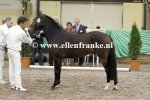 Bestelnummer 180212243 Stable-Line's Quantum of Solace (Woodrow Carisbrooke x Valentino).JPG