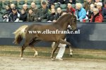 Bestelnummer 180212271 Wicked Nightshift (Wellhouse Sportsman x Burley Phantom).JPG