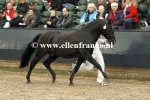 Bestelnummer 180212282 Young Winsome's Adrian (Duke's Forest Antares x Oosterbroek Arthur)-1.JPG