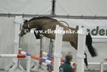 210215116 Asterhof's Emiel (Woodrow Carisbrooke x Luckington Sportaide)-001.JPG