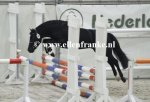 210215240 Jowout's Blacky (Haywards Guardsman x Heuvingshof Wout)-001.JPG