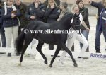 210215246 Jowout's Blacky (Haywards Guardsman x Heuvingshof Wout)-007.JPG
