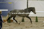 Bestelnummer 011212235 Willow's Mephisto (Easter Mountain Didly Do x Marnehoeve's Everest).JPG