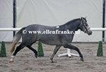 Bestelnummer 011212236 Willow's Mephisto (Easter Mountain Didly Do x Marnehoeve's Everest).JPG